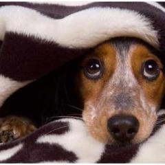 Evcil Hayvan Olarak Köpekler