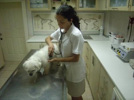 goksu-veteriner