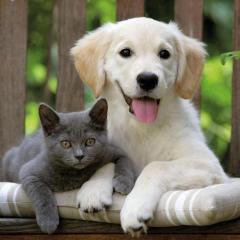 Kedi ve Köpeklerde Ağızdaki Tümöral Oluşumlar