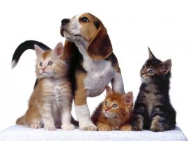 ozgur-veteriner