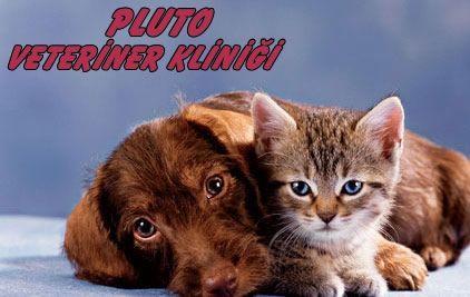 pluto-veteriner-klinigi-01