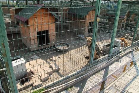 yedikule-hayvan-barinagi