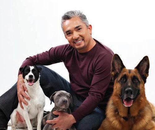 Cesar Millan'dan Köpek Sahiplerine Tüyolar
