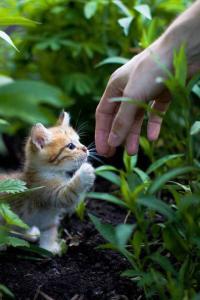 kedi-korkusu