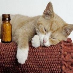 Kedilerde Aspirin Zehirlenmesi