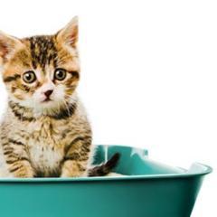 Kedinizin Tuvalet Eğitimi