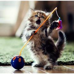 Kedinizin Davranış Biçimini Test Edin!