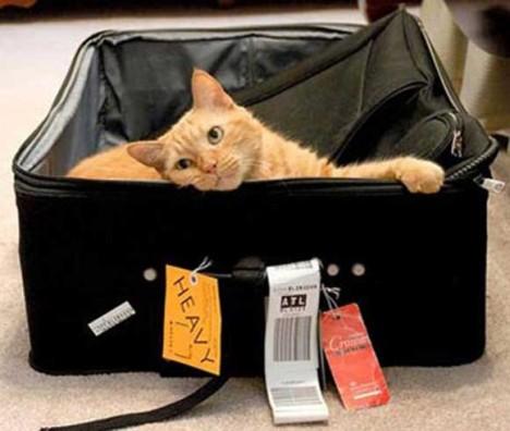 kediyle-seyahat