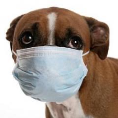 Köpeklerde Hapşırık ve Burun Akıntısının Nedenleri