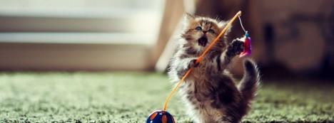 oyun-oynayan-kedi