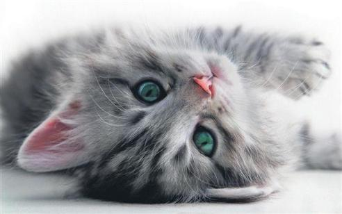 yavru-kediler-02