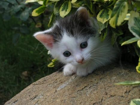 yavru-kediler-03