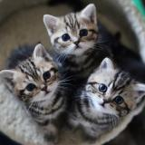 Kedilerde İstenmeyen Gebelik