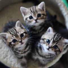 Kediler İnsanları da Kedi Olarak Görüyor
