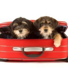 Yavru Köpeğinizle Seyahat