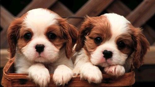 Köpek Alırken Bunlara Dikkat Edin!