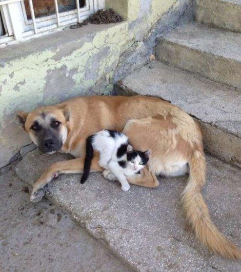 batmanda-kedi-kopek-dostlugu (2)