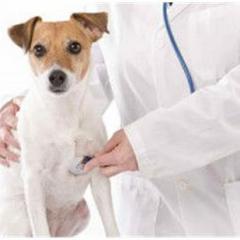 Çağdaş Veteriner Kliniği – Aydın/Kuşadası