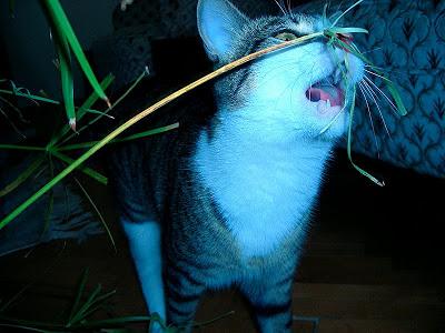 cicek-yiyen-kedi
