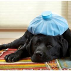 Çizmeli Kedi Veteriner Kliniği – Çekmeköy