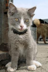 dort-kulakli-kedi (3)
