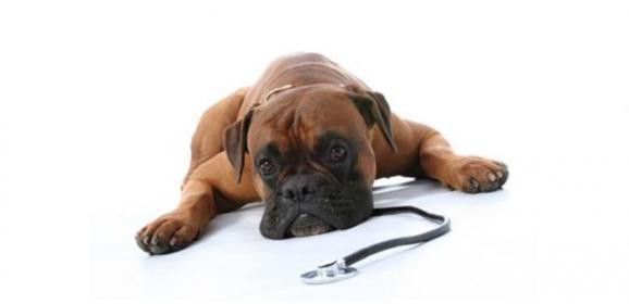 Ege Pet Park Veteriner Kliniği – Alsancak