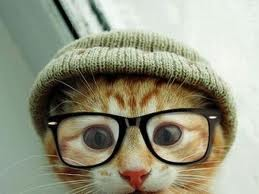 gozluklu-kedi