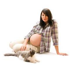 Hamilelikte Kedi Beslemek Güvenli midir?