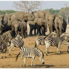 Hayvanların Bilinmeyen Yönleri