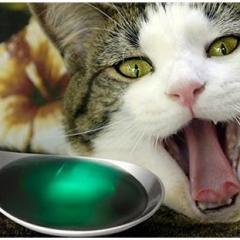 Kedi Gribi