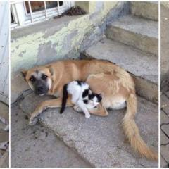 Kedi ile Köpeğin Dostluğu Duygulandırdı