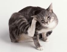 kedi-kopeklerde-alerji-02