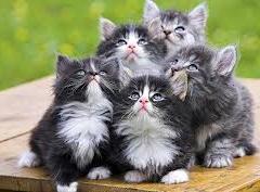 Kedinizi Seçerken Nelere Dikkat Etmelisiniz ?