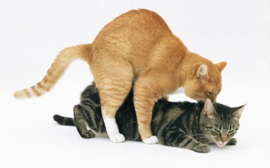 Kedinizin Her Yere Sizinle Gelmesini İster Misiniz