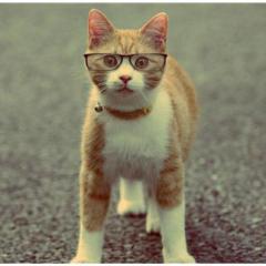 Kedilerde Göz Enfeksiyonları