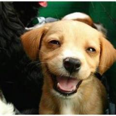 Köpeğinizi Mutlu Etmenin 7 Yolu