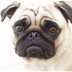 Yeni yasayla komşunuz köpeğinizi öldürebilir