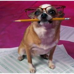 Köpeğinize Beceri Öğretmek Daha İyi Bir Eğitim Sağlar