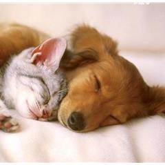 Kedi ve Köpeğinizin Hayatını Riske Atmayın!