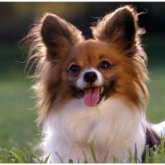 Köpekler Hakkında 40 Pratik Bilgi…