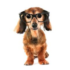 Köpeklerde Göz Problemleri