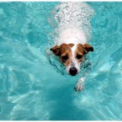 Köpeklerde Yüzme