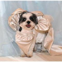 Köpeklerin Düğünü