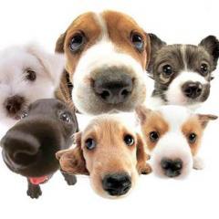 Köpeklerin Mizaç Karakterleri