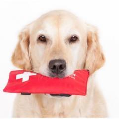 Pet Address Veteriner Kliniği – Bayrampaşa