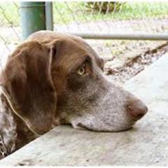 Terk Edilen Köpekler Psikolojik Sorunlar Yaşıyor