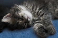 uyuyan-kedi