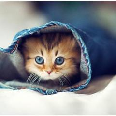 Yavru Kedilerde Isınma