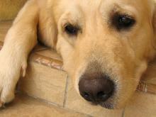 Sad-Dog-Pictures-6
