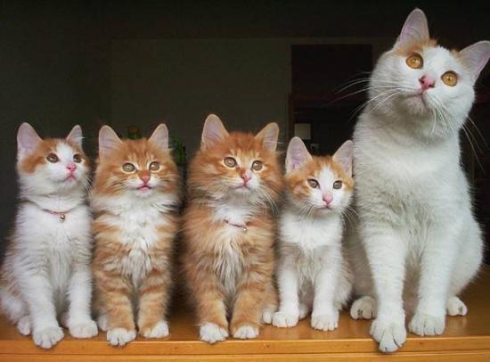 anne-kedi-ve-yavrularipg